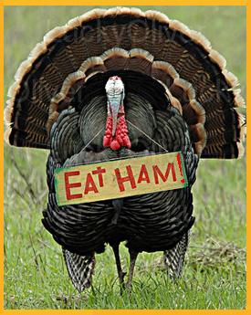 Turkey Bird2